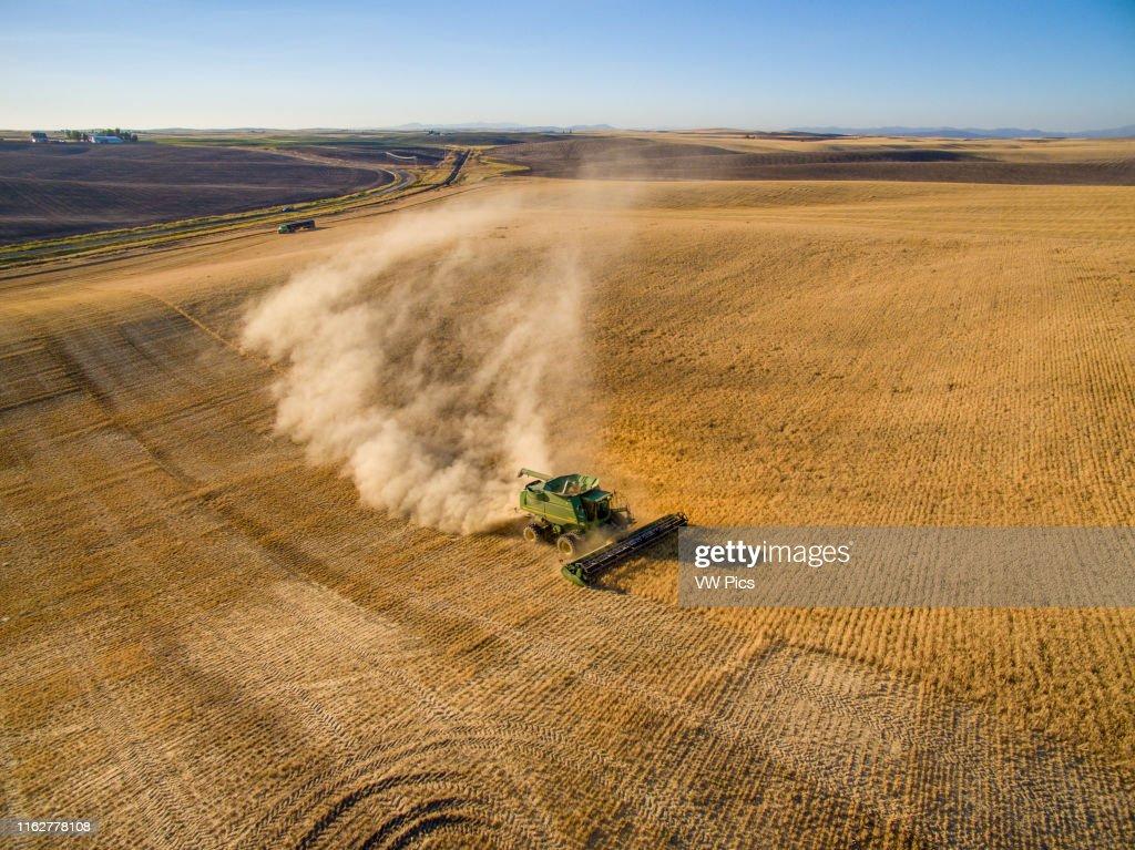 Barley harvest in Reardan, Washington. : News Photo