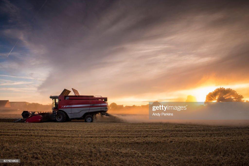 Barley Harvest, Norfolk UK : Stock Photo
