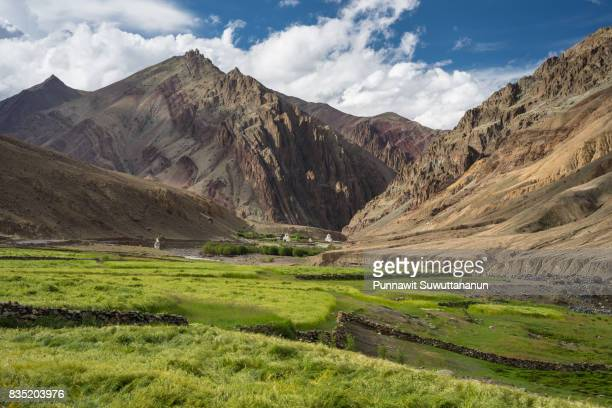 barley rice field in summer and himalaya moountain, leh, ladakh,india - kashmir stock photos and pictures