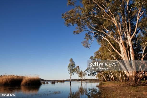 barmah forest national park,victoria,australia - wildnis stock-fotos und bilder