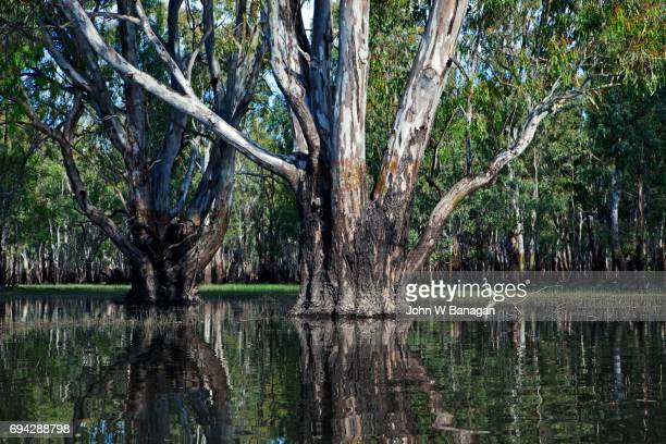 Barmah forest National Park,Victoria,Australia