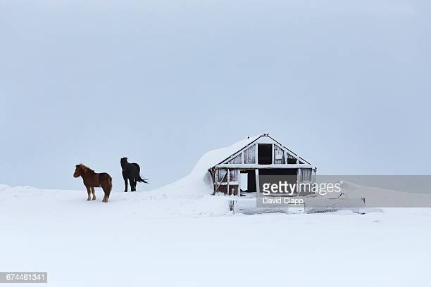 Barn and horse at Hella in Iceland
