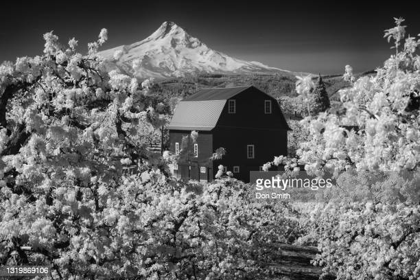barn and mt. hood through pear orchard - don smith stock pictures, royalty-free photos & images
