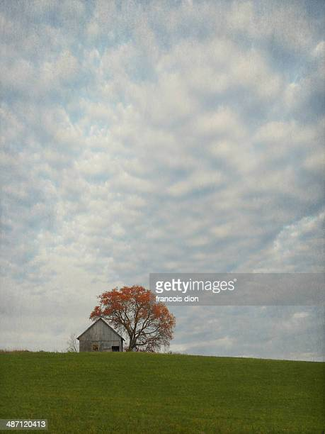Barn and tree on top of hill with big cloud sky