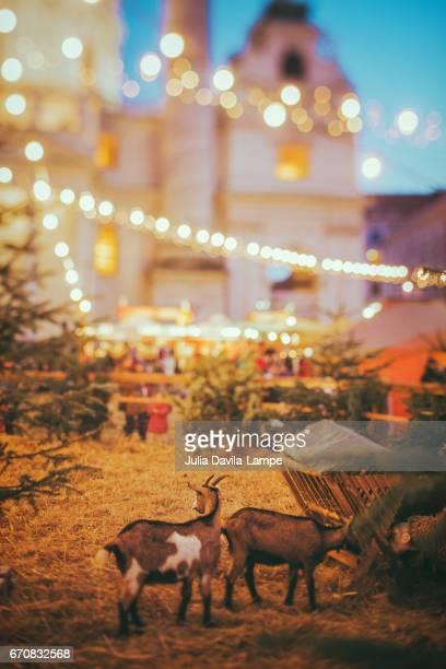 a barn at christmas. - julia scharf stock-fotos und bilder