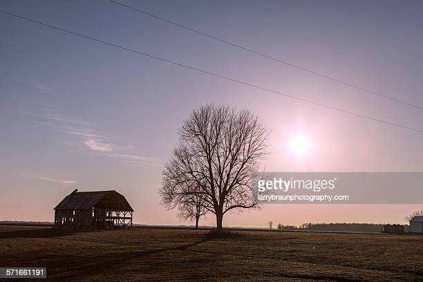 barn by a tree - rotten com stock pictures, royalty-free photos & images