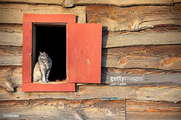 Barn cat in window