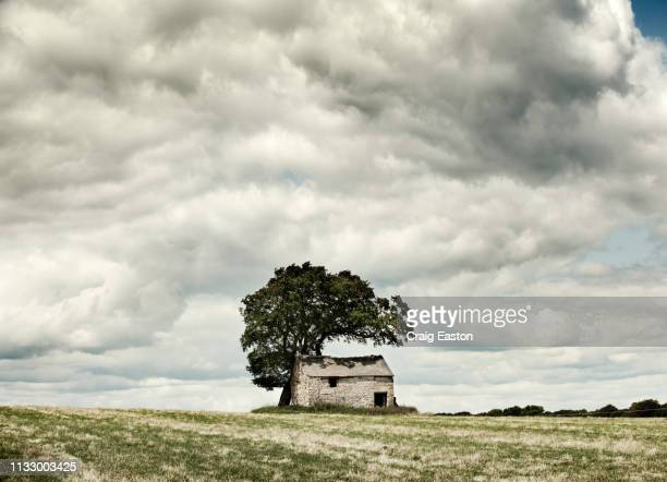 barn in a field - shack stock pictures, royalty-free photos & images