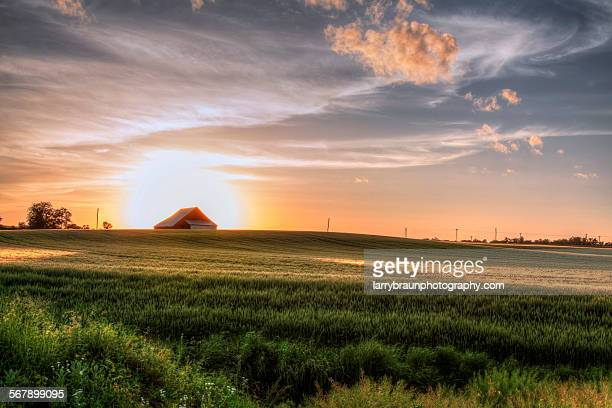 barn in a wheatfield - missouri stock pictures, royalty-free photos & images