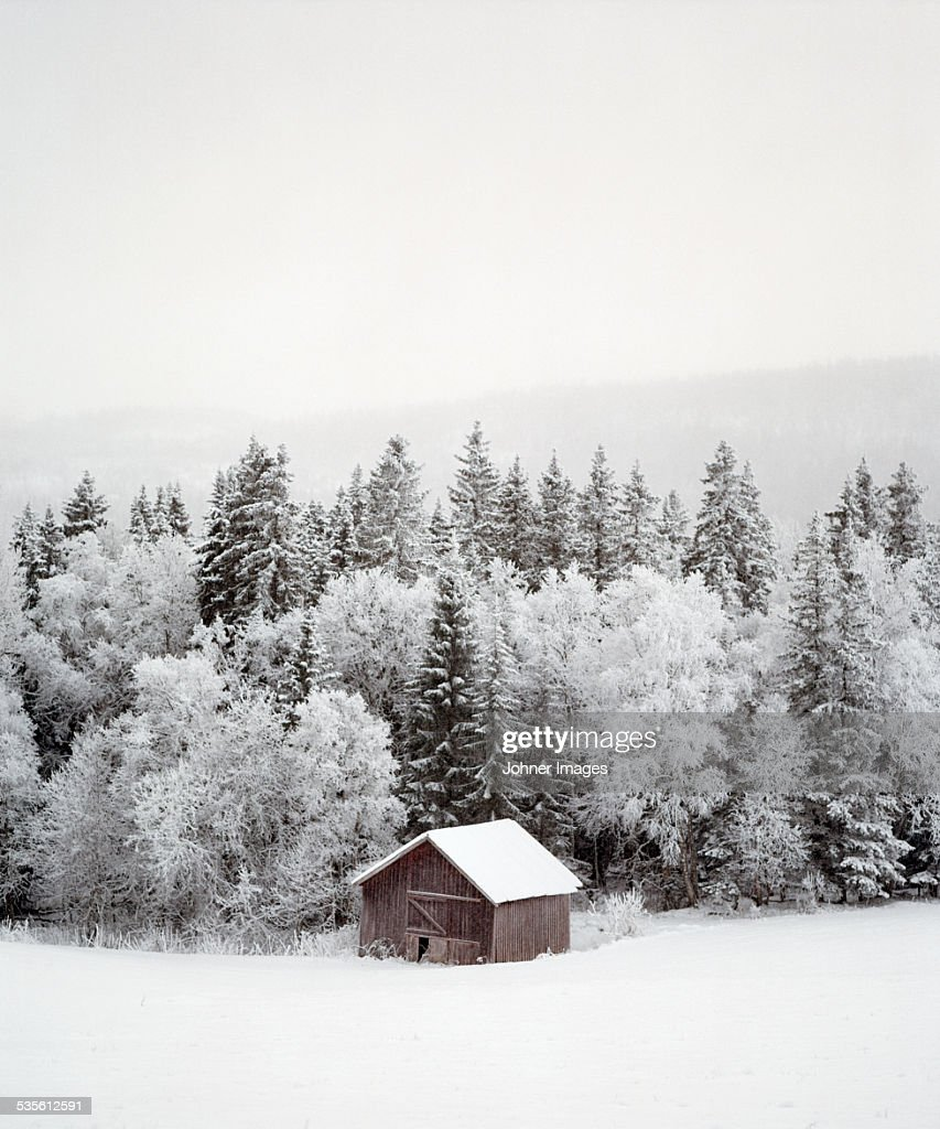 Barn near forest at winter : Stock Photo