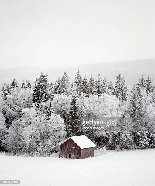 Barn near forest at winter