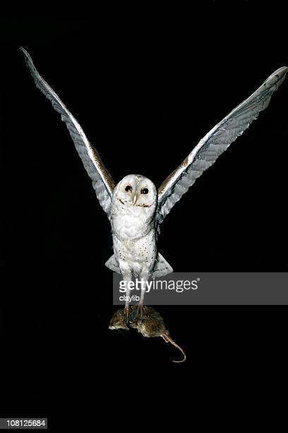 Coruja-das-torres depradadora nocturnos hunter