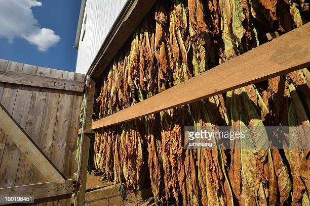 barn with tobacco leaves - lancaster pennsylvania stock pictures, royalty-free photos & images