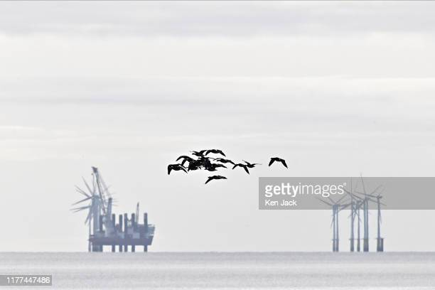Barnacle geese are silhouetted against the wind turbines of the offshore Robin Rigg windfarm in the Solway Firth on October 21 2019 in Southerness...