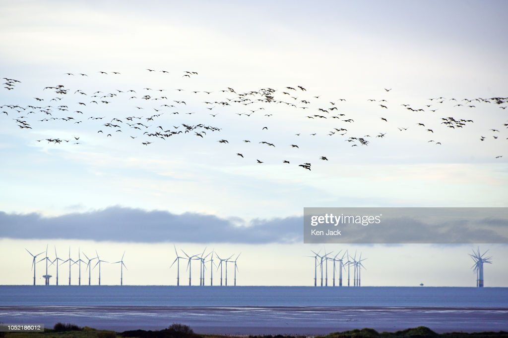Autumn Spectacle As Geese Return To The Solway : Foto jornalística