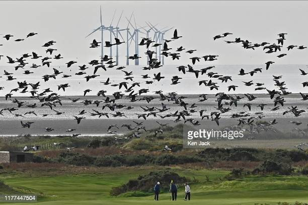 Barnacle geese share the shoreline with golfers on the Solway Firth with the Robin Rigg offshore windfarm in the background on October 21 2019 in...