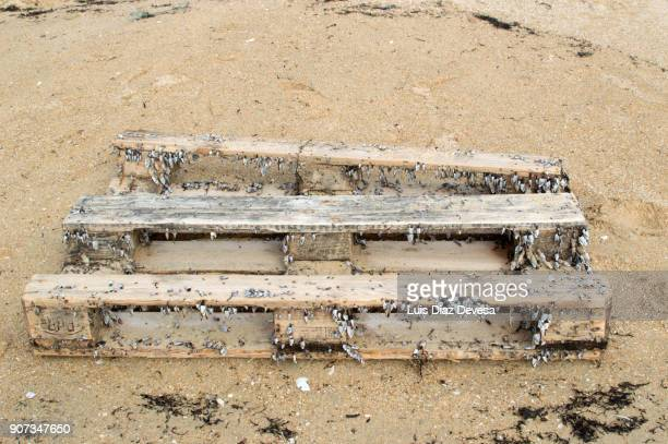 Barnacles  growing on pallet