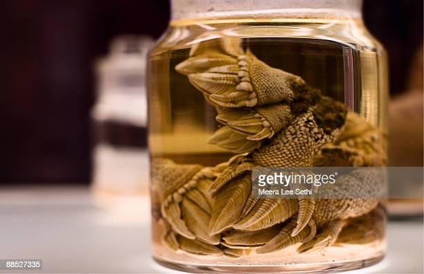 barnacles in glass jar - cambridge massachusetts stock pictures, royalty-free photos & images