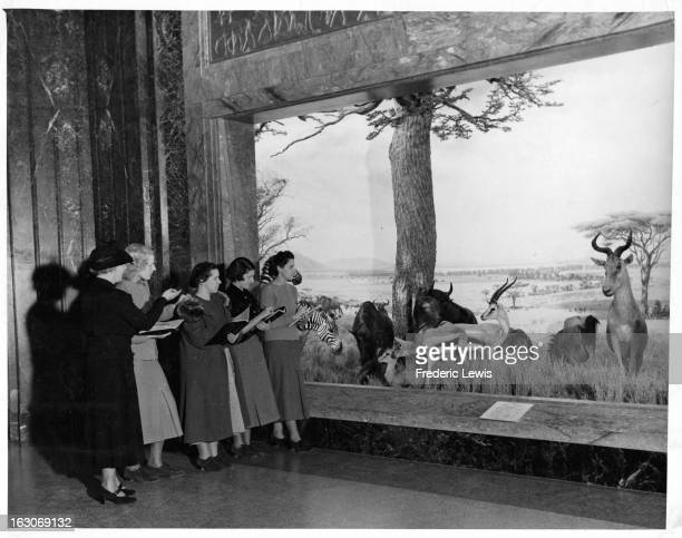 Barnard Students viewing and taking notes of an exibit of wild animals at The Museum Of Natural History in New York City, New York, 1955.