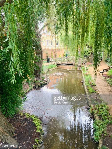 barnes pool n in eton - windsor england stock pictures, royalty-free photos & images