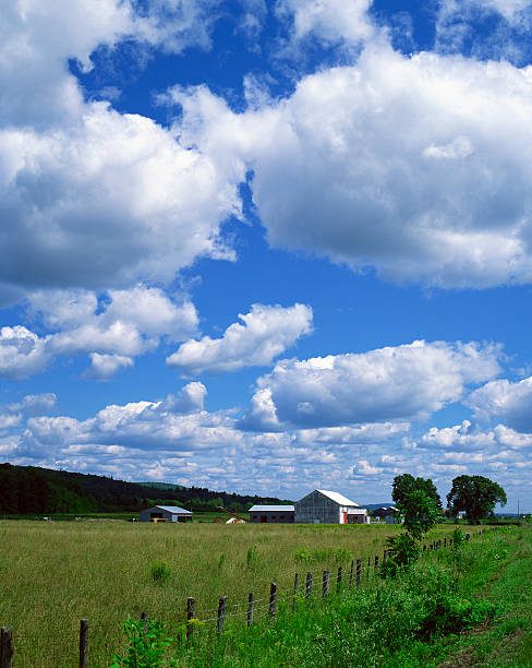 Barns in field, St-Ambroise, Lanaudiere, Quebec, Canada