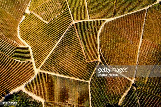 barolo wine region in autum, piedmont, italy - winemaking stock pictures, royalty-free photos & images