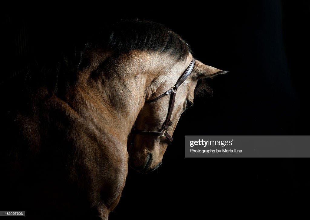 Baroque horse : Stock Photo