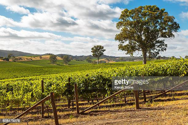 barossa valley - adelaide stock pictures, royalty-free photos & images