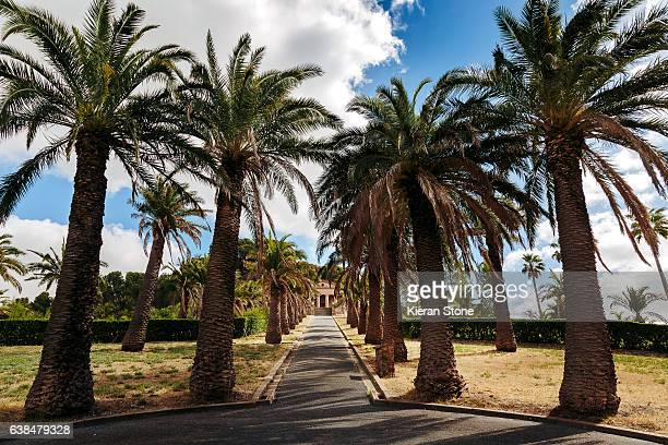 barossa valley - barossa valley stock pictures, royalty-free photos & images