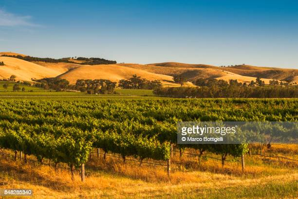 barossa valley, south australia. - south australia stock photos and pictures