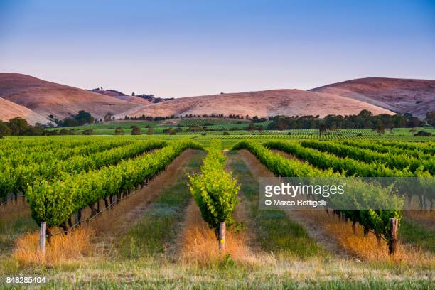 barossa valley, south australia. - south australia stock pictures, royalty-free photos & images