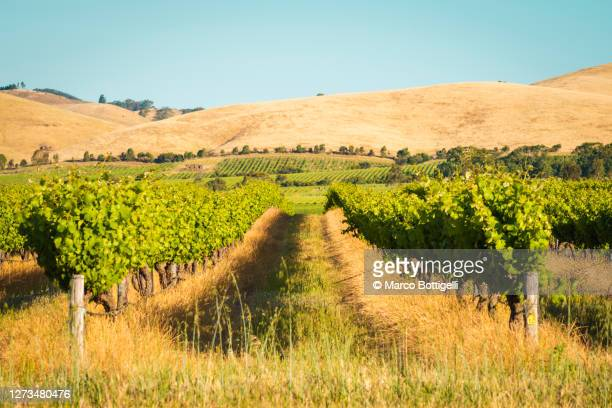 barossa valley vineyards, australia - barossa valley stock pictures, royalty-free photos & images