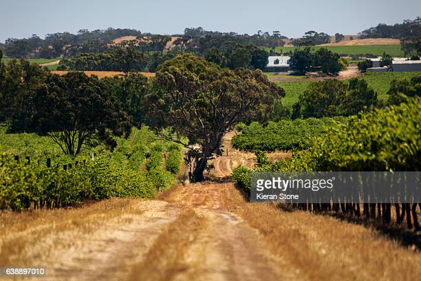 barossa vineyard - barossa valley stock pictures, royalty-free photos & images