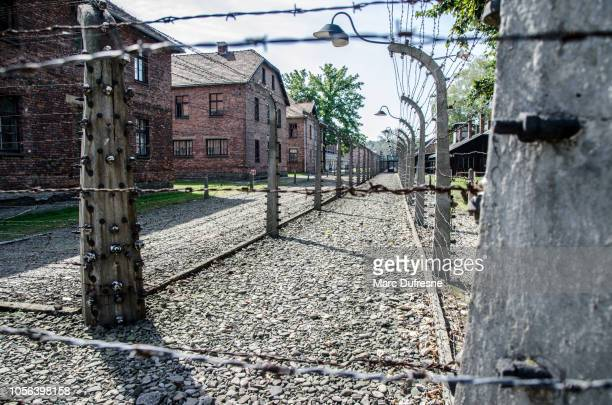 barracks of the auschwitz concentration camp in poland during summer day - auschwitz imagens e fotografias de stock