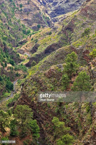 Barranco De Garome, ravine, view from Mirador de Garome, lookout point, Puntagorda, La Palma, Canary Islands, Spain