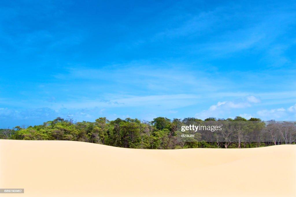 Barreirinhas - Lençois Maranhenses : Foto de stock