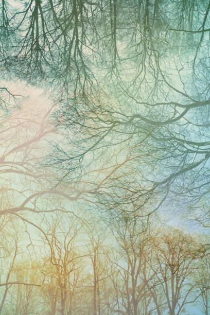 Barren Empty Trees