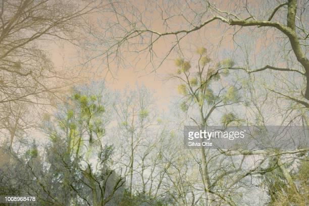Barren Empty Trees with Mistletoe