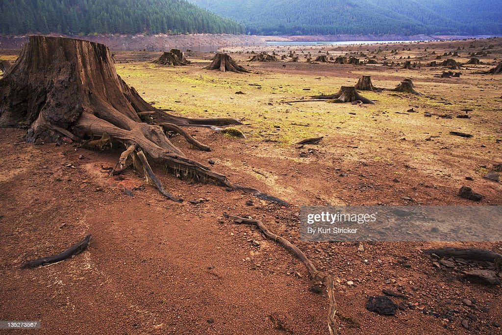 Barren lake with tree stumps : Stock Photo