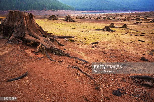 Barren lake with tree stumps