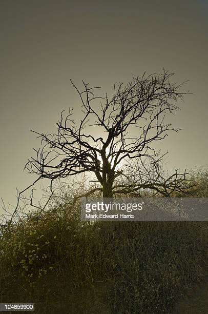 barren tree, griffith park, los angeles - griffith park stock pictures, royalty-free photos & images