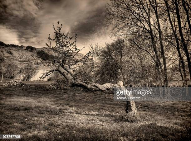 barren trees and heavy clouds in black and white - llorente stock pictures, royalty-free photos & images