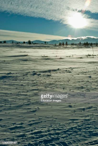 Barren Winter Landscape in Yellowstone National Park Wyoming