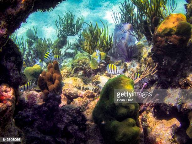 Barrier Reef Wildlife in the Cayman Islands