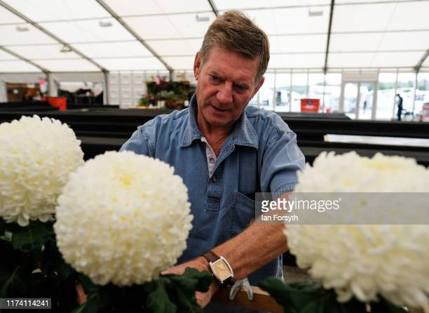 Barry Hogg Secretary of the Northern Chrysanthemum Society makes final preparations to a display during staging day for the Harrogate Autumn Flower...