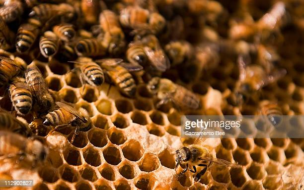 Barry Olmstead is a beekeeper from Elk Grove California and with his son Joshua started the Save the Bee Foundation and wants to apply for a grant of...