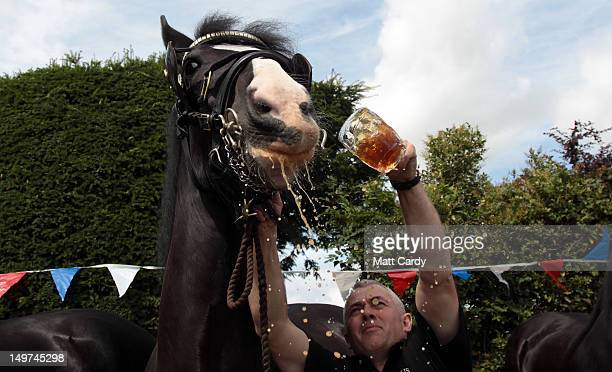 Barry Petherick gives Monty the Wadworth brewery shire horse a pint of beer outside the Raven Inn in Poulshot as he starts his twoweek annual holiday...