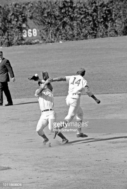 Chicago Cubs Ernie Banks and Glenn Beckert in action fielding colliding and pursuing fly ball vs Los Angeles Dodger at Wrigley Field Chicago IL...