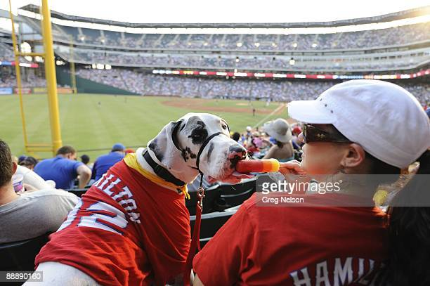 View of dog with owner during Dog Day sponsored by PETCO and Natural Balance during Texas Rangers vs San Diego Padres game. Animal. Arlington, TX...