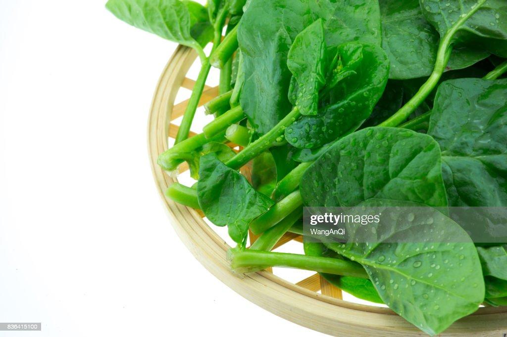 Basella Alba Malabar Spinach isolated on white background : Stock Photo